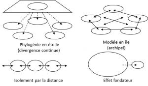 Encyclopedie environnement - polymorphisme - modele structuration population