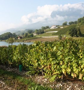 Encyclopedie environnement -pesticides - vignes lac saint andre traitees 20e siecle