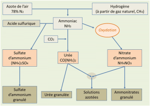Encyclopedie environnement - nitrates sol - schema voies synthese fertilisants azotes