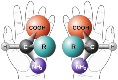 isomeres levogyres - compose chiral - acide anime