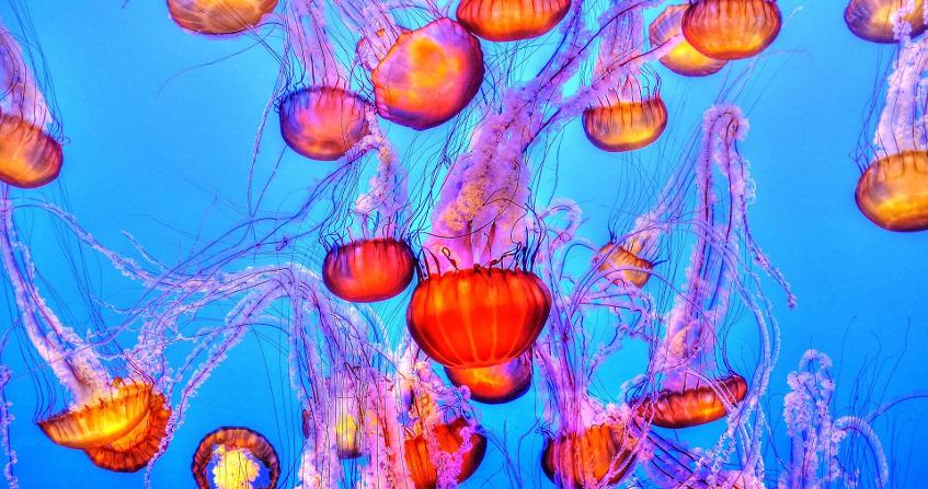 marine environment - sea