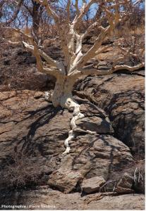 Encyclopédie environnement - biosphère - système racinaire - root system