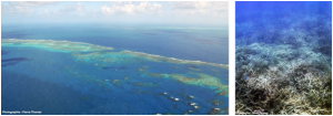 Encyclopédie environnement - biosphère - grande barrière de corail - great barrier reef of cairn
