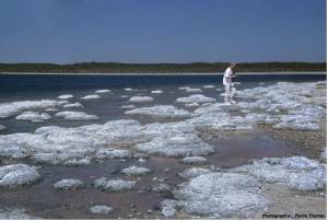 Encyclopédie environnement - biosphère - stromatolithes du lac Thetis - stromatolites of lake thetis