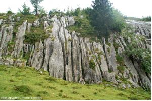 Encyclopédie environnement - biosphère - karst - limestone zone