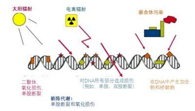 环境百科全书-放射性- DNA面临的不同压力源