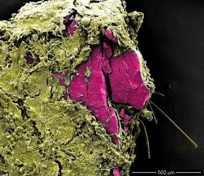 环境百科全书-塑料污染-微塑料
