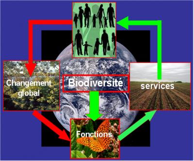 relationships biodiversity and society - biodiversity
