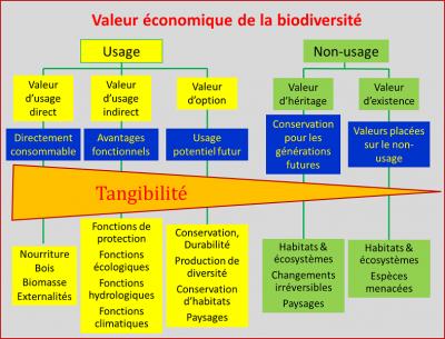 different types of values biodiversity - biodiversity