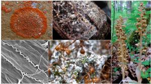 Encyclopédie environnement - parasites - symbioses mutualistes impliquant des champignons - symbiosis