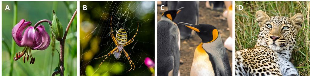 Encyclopédie environnement - biodiversité - espèces - biodiversity - diversity species animals