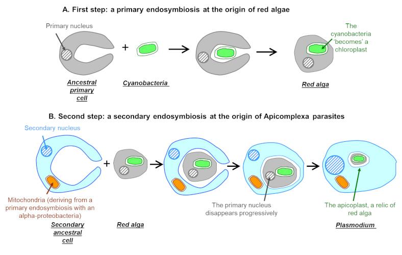 celule parazite negii înșiși dispar