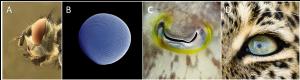 Encyclopédie environnement - lumière - exemples yeux composés