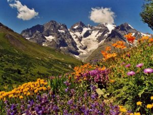 Encyclopédie environnement - plantes alpines - floraisons multicolores - alpine plants - colors plants moutains
