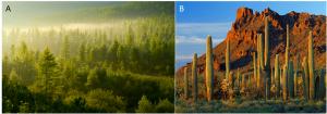 Encyclopédie environnement - plantes - Diversité de la végétation - vegetation diversity