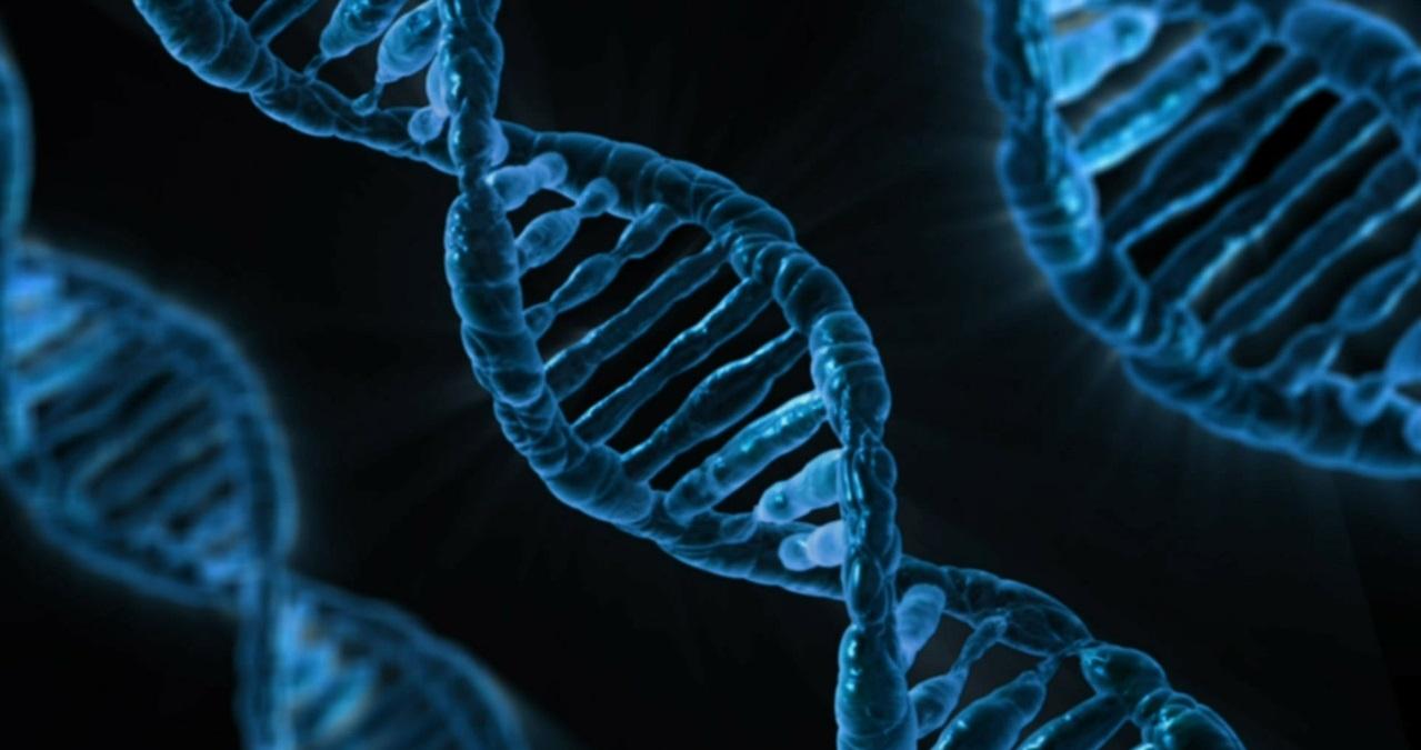 Encyclopédie environnement - génome - genome