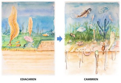 Encyclopédie environnement - écosystèmes complexes - Transformation des fonds marins au passage Ediacarien-Cambrien - Transformation of the seabed at the Ediacaran-Cambrian