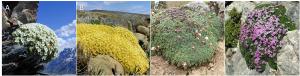 Encyclopédie environnement - évolution - plantes en coussins - cushion plants