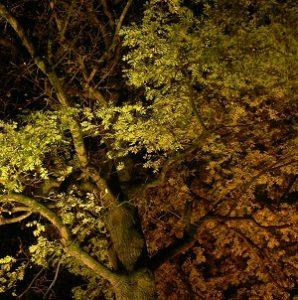 Encyclopédie environnement - pollution lumineuse - couverture3