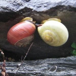 Encyclopédie environnement - escargot - couverture
