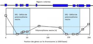 Encyclopedie environnement - polymorphisme - Balayage selectif - polymorphism