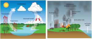 Encyclopédie environnement -modèles biosphère, hydrosphère, cryosphère - cycle eau et carbone - water cycle - carbon cycle
