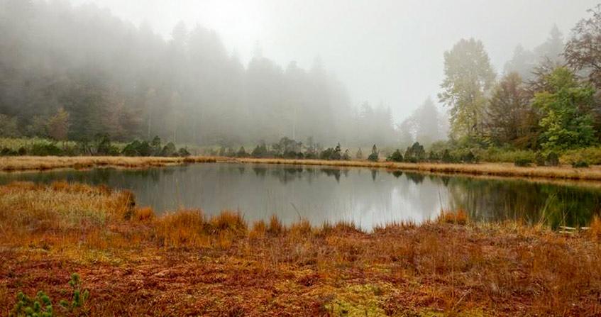 Encyclopédie environnement - tourbière marais - Le Lac Luitel