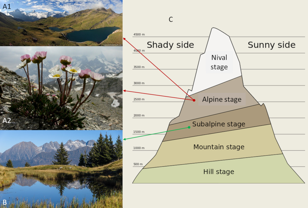How do plants cope with alpine stress? - Encyclopédie de l