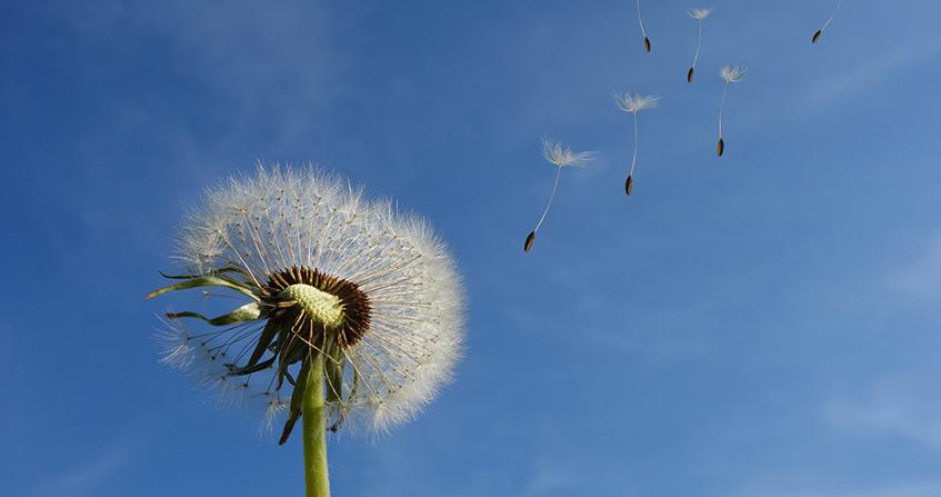 Encyclopédie environnement - droit qualité de l'air - air quality law