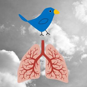 oiseaux - encyclopedie environnement