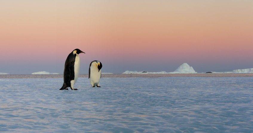 antarctique - manchots empereurs - terre adelie - antarctic treaty - penguins
