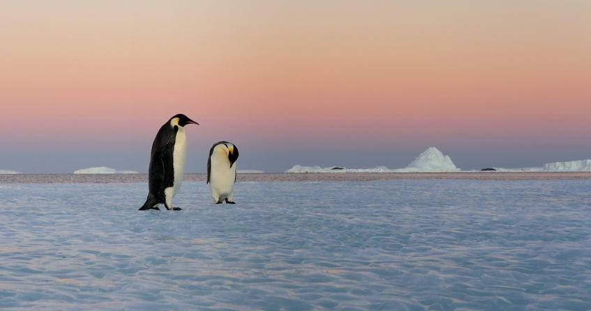 antarctique - manchots empereurs - terre adelie - encyclopedie environnement