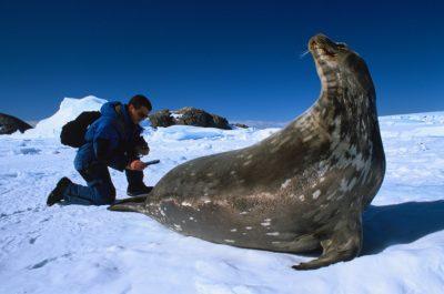 convention protection phoques antarctique - antarctic seals
