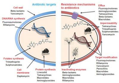 生素靶点和细菌耐药机制