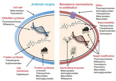 bacterial resistance mechanisms