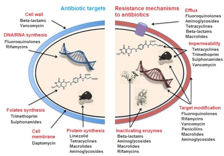 Antibiotics  Antibiotic Resistance And Environment