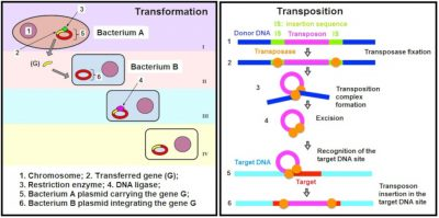 transformation and transposition