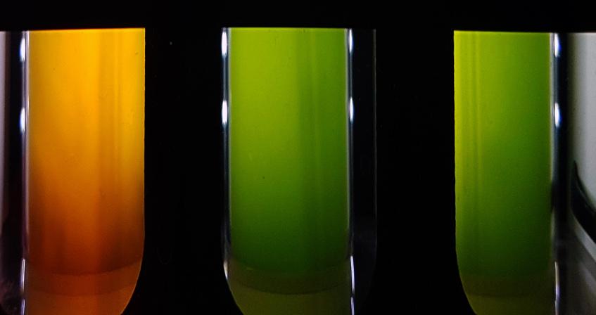 culture microalgues photobioreacteurs - encyclopedie environnement