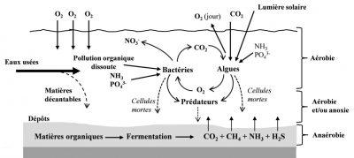 环境百科全书-污水-天然泻湖法