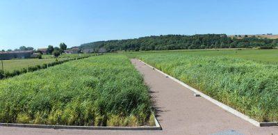 环境百科全书-污水-种植芦苇的滤池