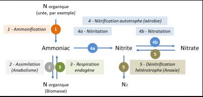 环境百科全书-污水-氮污染转化过程