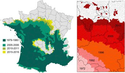 chenille processionnaire france
