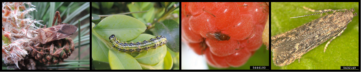 Climate change and globalization, drivers of insect