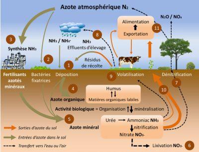 cycle azote - schema cycle azote