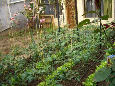 apartment garden - garden city