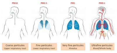 环境百科全书-空气中的颗粒物-支气管肺系统