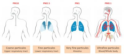 lung penetration particles pollution