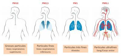 particules air poumons - pollution poumons