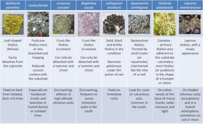 lichens - lichens examples - lichens categories