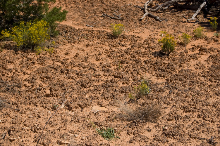 Lichens, surprising pioneering organisms - Encyclopédie de l